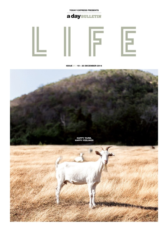 a day BULLETIN LIFE issue 41
